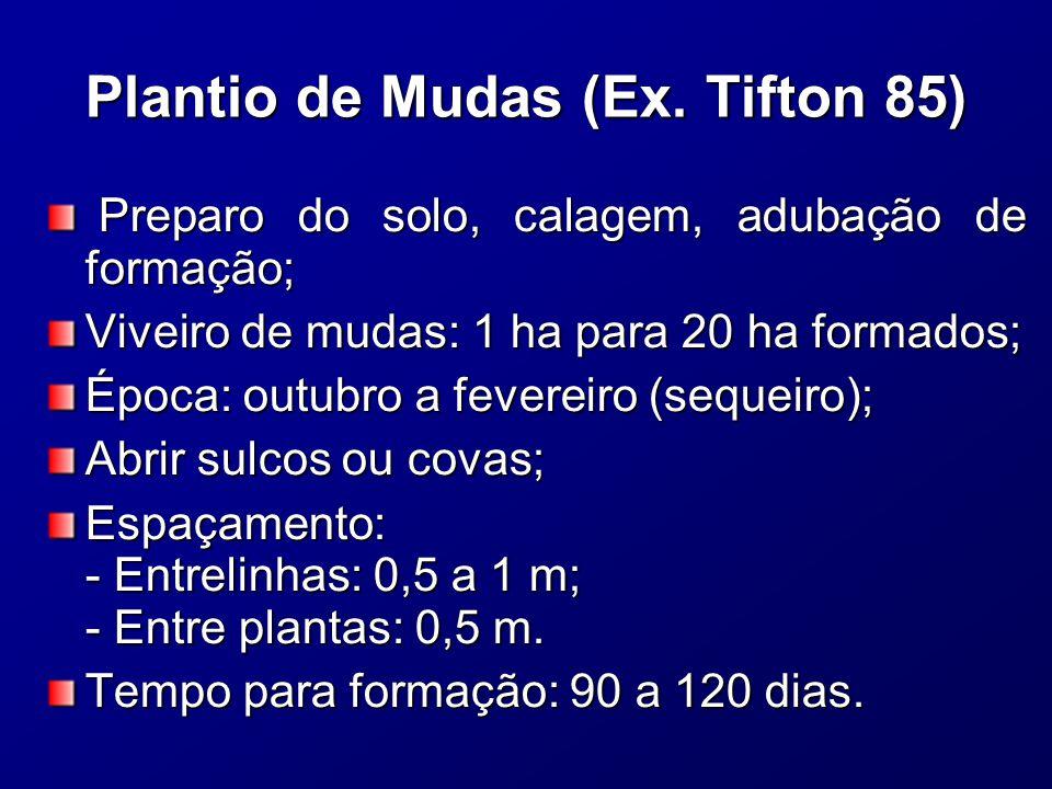 Plantio de Mudas (Ex.