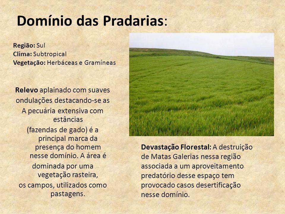 Domínio das Pradarias: Relevo aplainado com suaves ondulações destacando-se as A pecuária extensiva com estâncias (fazendas de gado) é a principal mar
