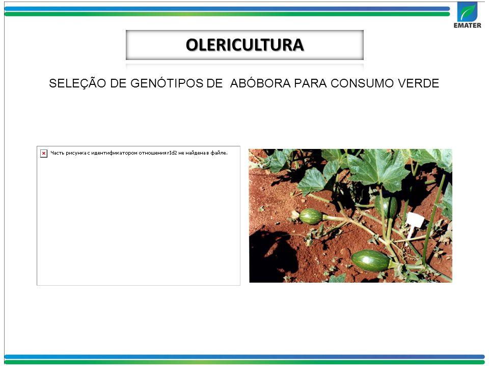 SELEÇÃO DE GENÓTIPOS DE ABÓBORA PARA CONSUMO VERDE