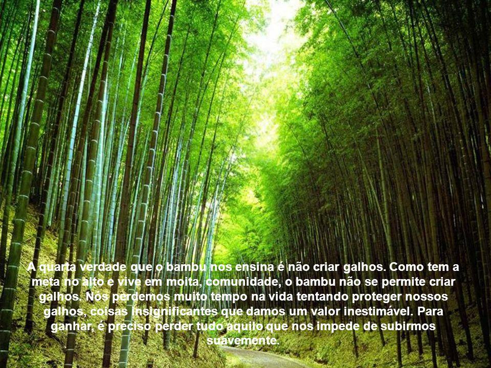 Terceira verdade: Você já viu um pé de bambu sòzinho? Apenas quando é novo, mas antes de crescer ele permite que nasça outros a seu lado (como no coop