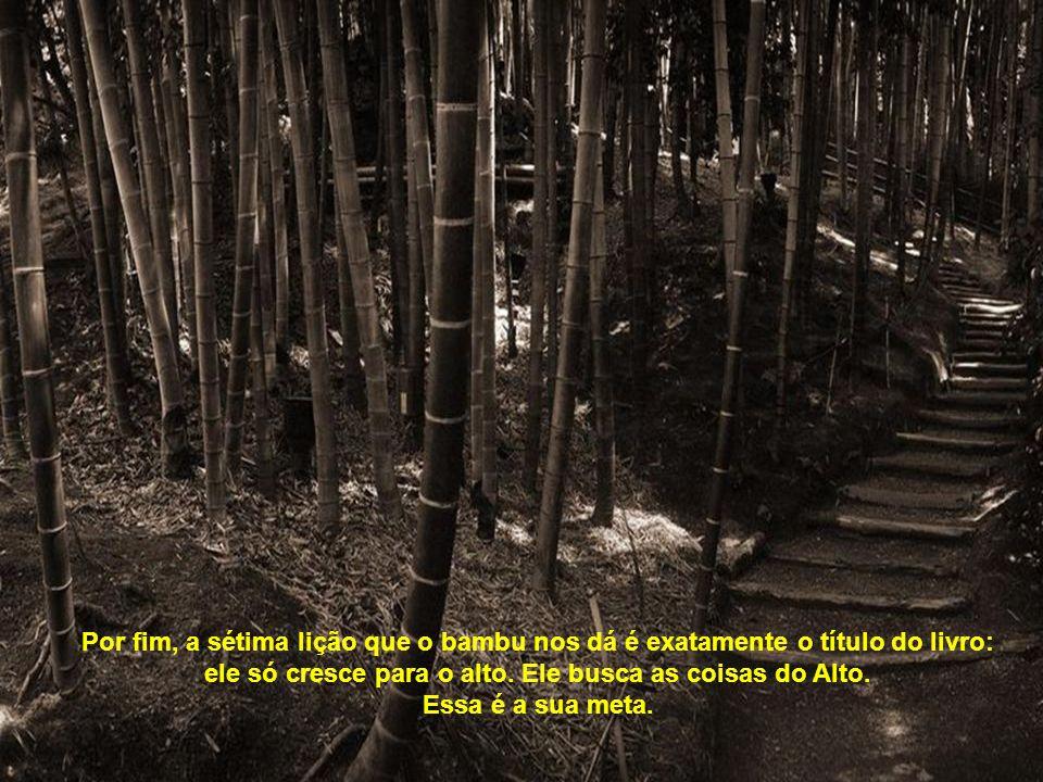 A sexta verdade é que o bambu é ôco, vazio de si mesmo. Enquanto não nos esvaziarmos de tudo aquilo que nos preenche, que rouba nosso tempo, que tira