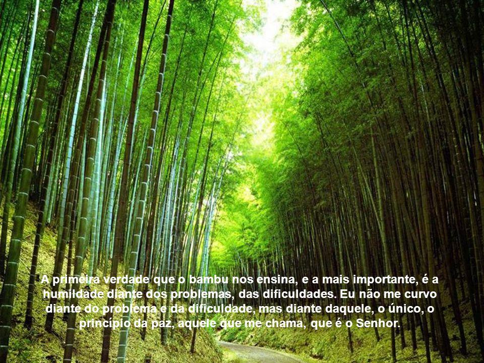 Filho, o bambu permanece em pé porque teve a humildade de se curvar na hora da tempestade. A figueira quis enfrentar o vento. O bambu nos ensina sete