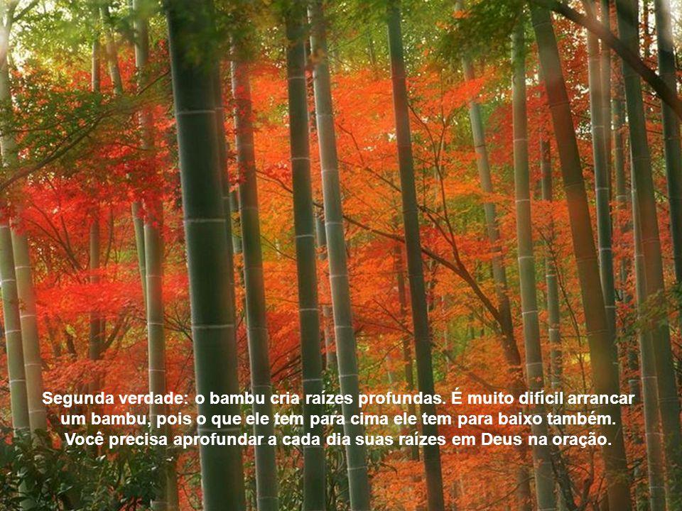 Segunda verdade: o bambu cria raízes profundas.