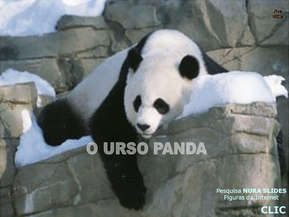Situação O panda gigante é o símbolo das espécies ameaçadas.