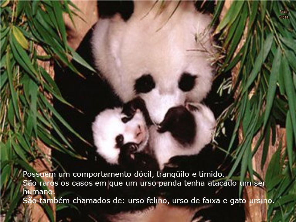 Apesar de serem carnívoros, alimentam-se principalmente de folhas e brotos de bambu. Comem também alguns insetos e ovos como fontes de proteínas. O pa