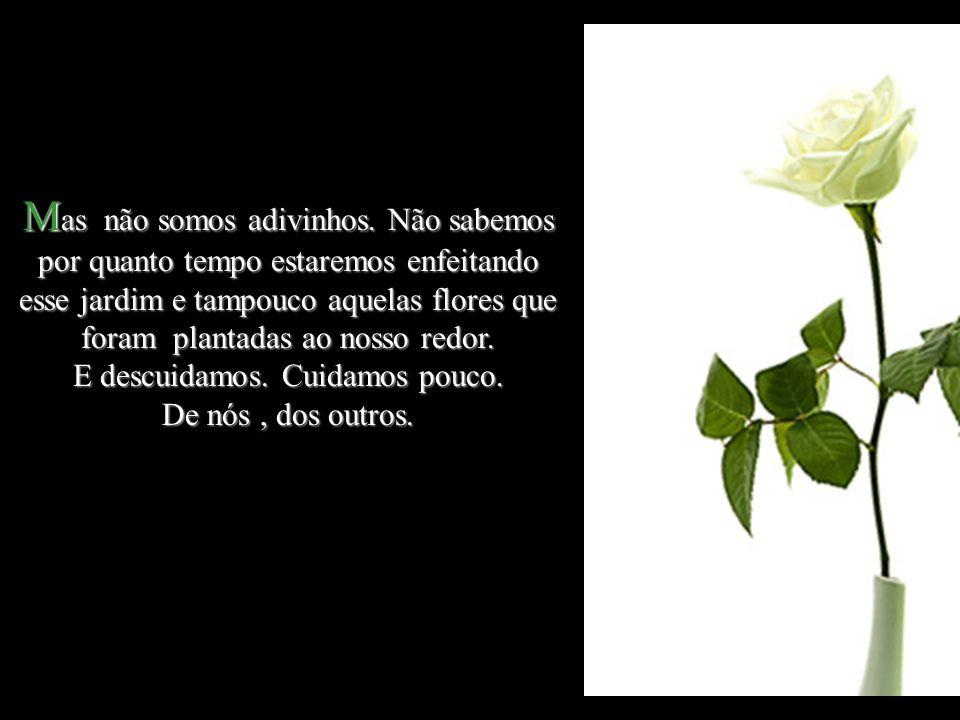 M uitas M uitas flores são colhidas cedo demais.Algumas, ainda em botão.