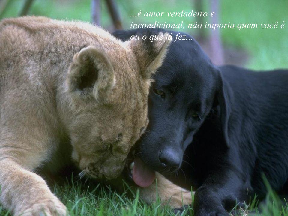 ...é amor verdadeiro e incondicional, não importa quem você é ou o que já fez...