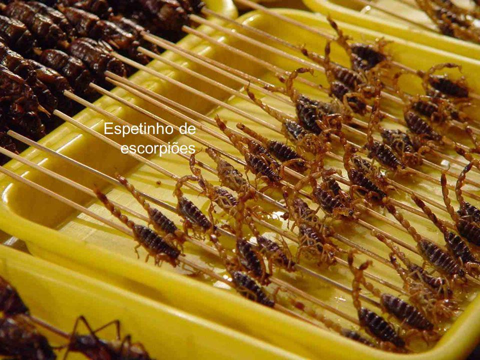 Escorpião negro Bicho da seda Cigarras Besouros de esterco