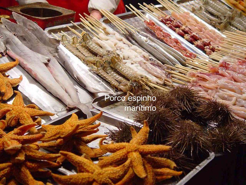 Ostras, calamares e joelhos de iguana