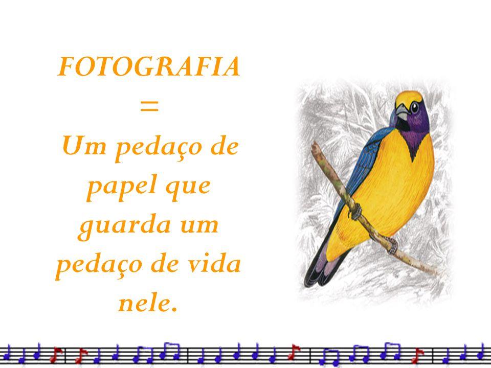 FOTOGRAFIA = Um pedaço de papel que guarda um pedaço de vida nele.