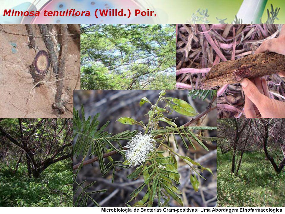 Microbiologia de Bactérias Gram-positivas: Uma Abordagem Etnofarmacológica Mimosa tenuiflora (Willd.) Poir.