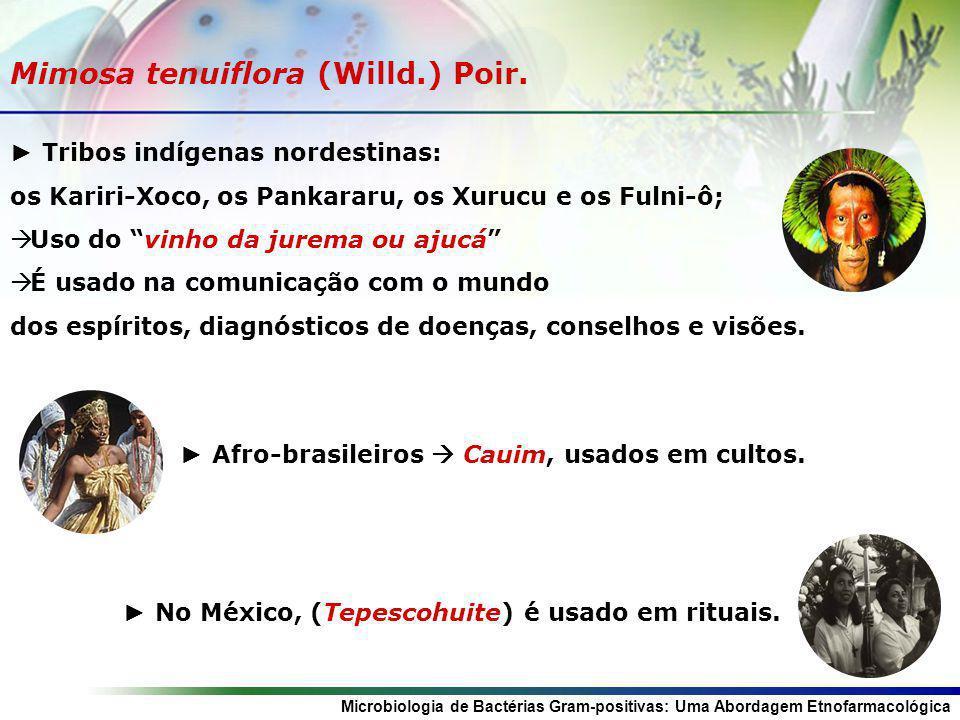 Microbiologia de Bactérias Gram-positivas: Uma Abordagem Etnofarmacológica Mimosa tenuiflora (Willd.) Poir. Tribos indígenas nordestinas: os Kariri-Xo