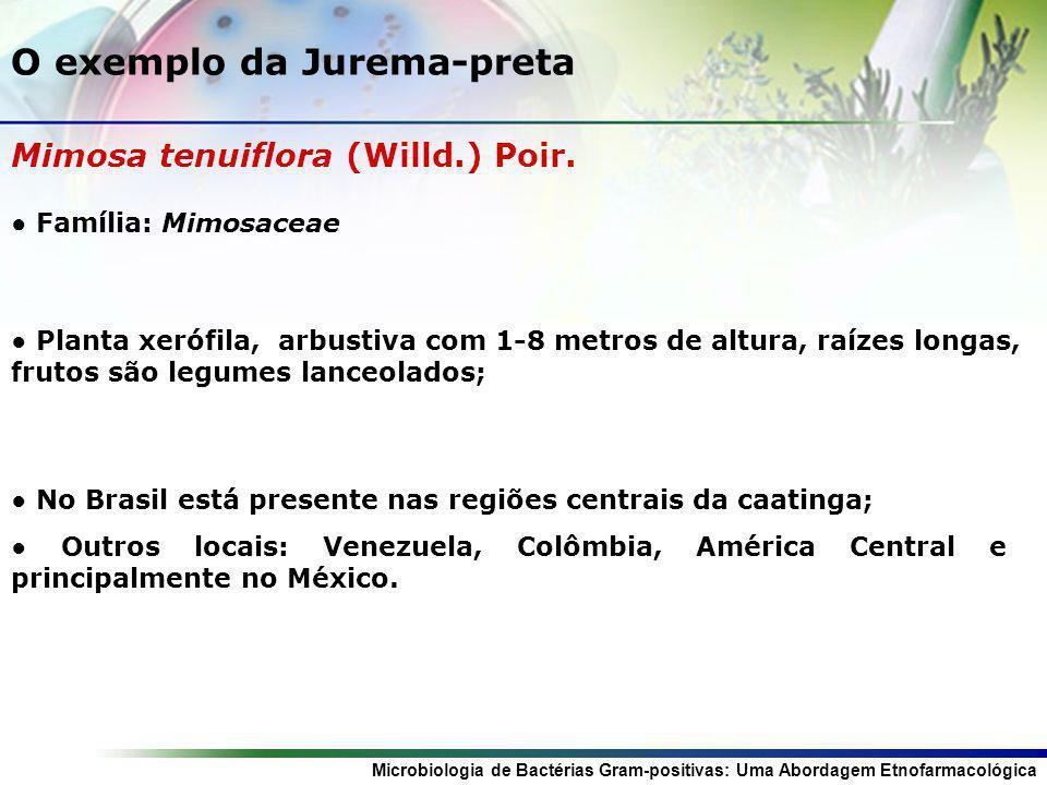 Microbiologia de Bactérias Gram-positivas: Uma Abordagem Etnofarmacológica O exemplo da Jurema-preta Mimosa tenuiflora (Willd.) Poir. Família: Mimosac