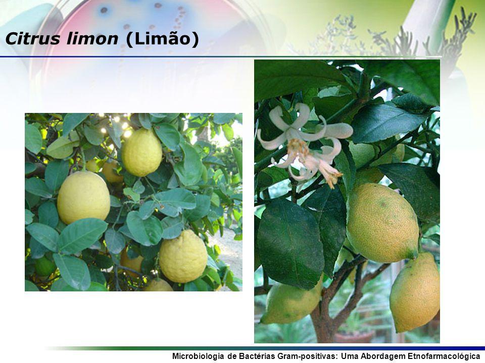 Microbiologia de Bactérias Gram-positivas: Uma Abordagem Etnofarmacológica Citrus limon (Limão)