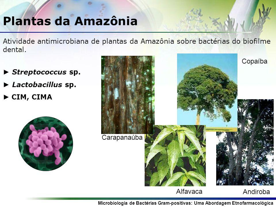 Microbiologia de Bactérias Gram-positivas: Uma Abordagem Etnofarmacológica Plantas da Amazônia Atividade antimicrobiana de plantas da Amazônia sobre bactérias do biofilme dental.