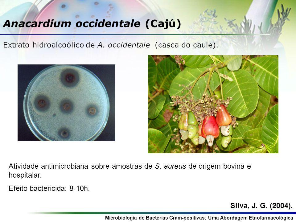 Microbiologia de Bactérias Gram-positivas: Uma Abordagem Etnofarmacológica Punica granatum (Romã) Extrato hidroalcoólico de P.