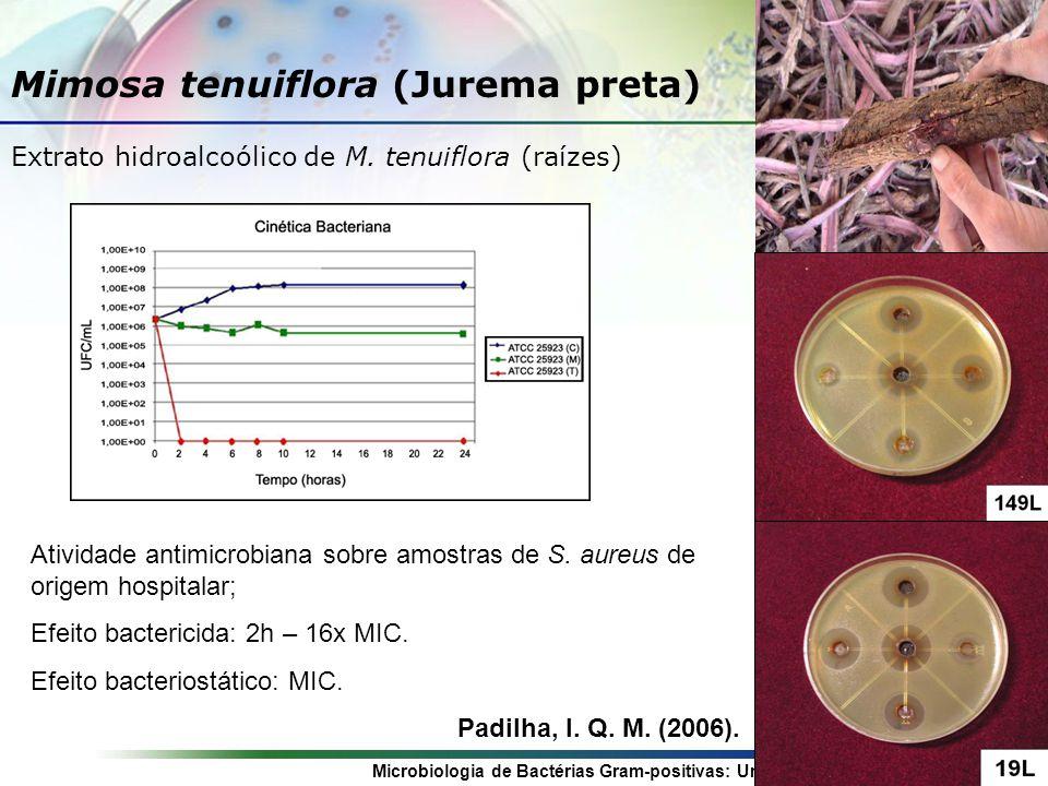 Microbiologia de Bactérias Gram-positivas: Uma Abordagem Etnofarmacológica Mimosa tenuiflora (Jurema preta) Extrato hidroalcoólico de M.