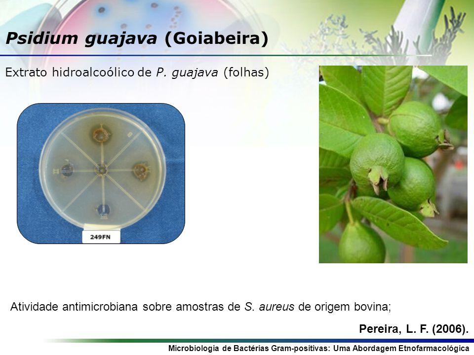Microbiologia de Bactérias Gram-positivas: Uma Abordagem Etnofarmacológica Psidium guajava (Goiabeira) Atividade antimicrobiana sobre amostras de S.