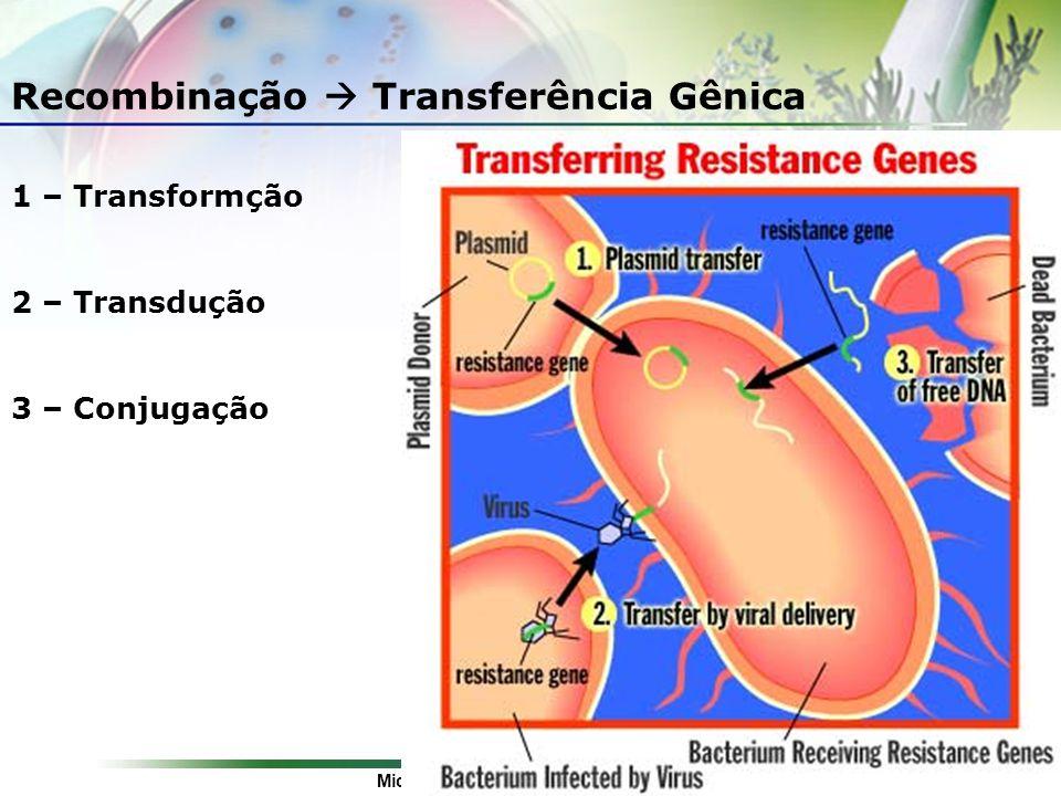 Microbiologia de Bactérias Gram-positivas: Uma Abordagem Etnofarmacológica Recombinação Transferência Gênica 1 – Transformção 2 – Transdução 3 – Conju