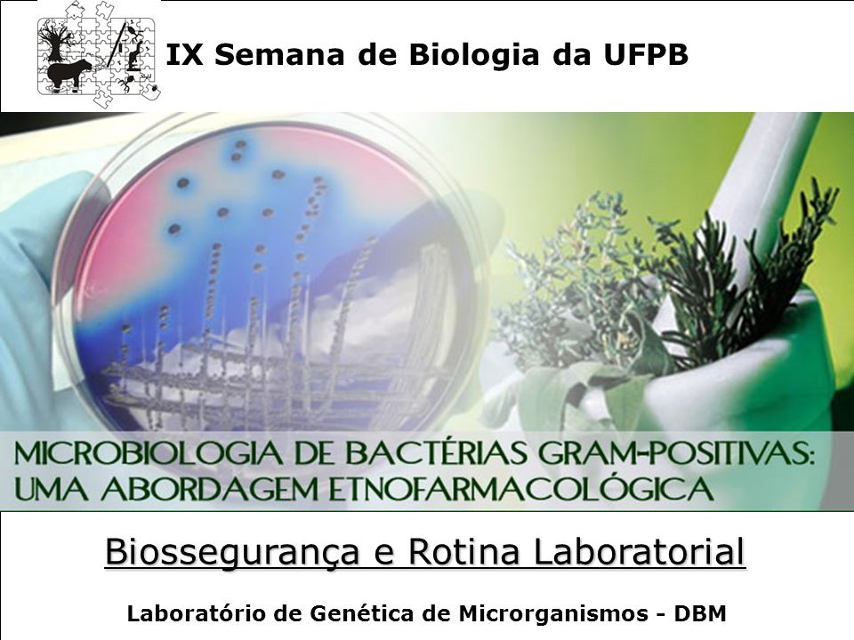 Microbiologia de Bactérias Gram-positivas: Uma Abordagem Etnofarmacológica IX Semana de Biologia da UFPB Laboratório de Genética de Microrganismos - DBM Biossegurança e Rotina Laboratorial