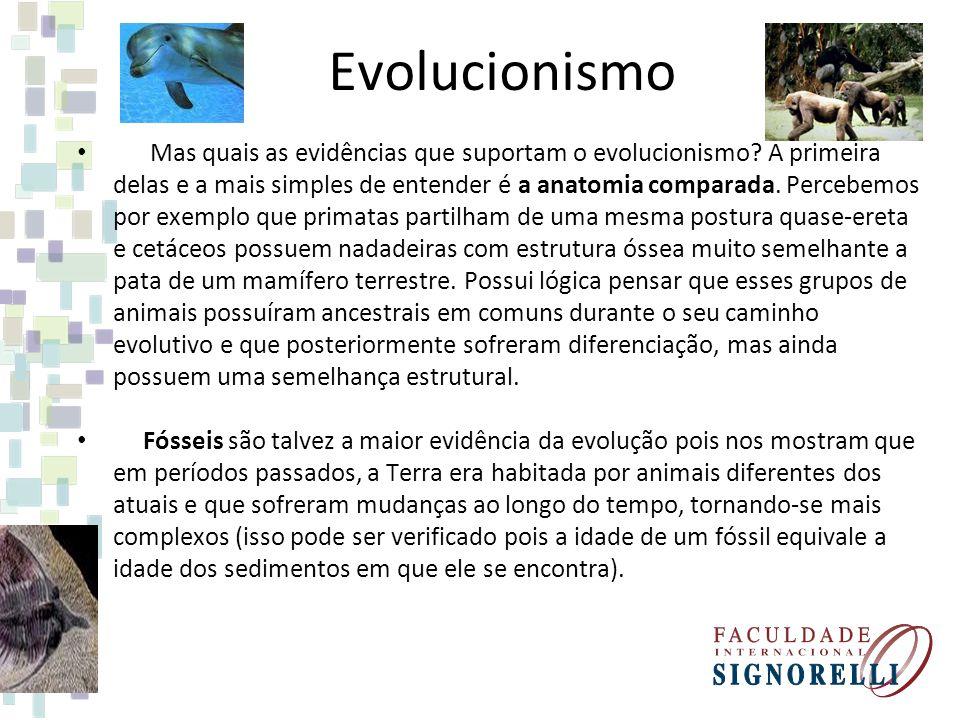 Evolucionismo Mas quais as evidências que suportam o evolucionismo? A primeira delas e a mais simples de entender é a anatomia comparada. Percebemos p