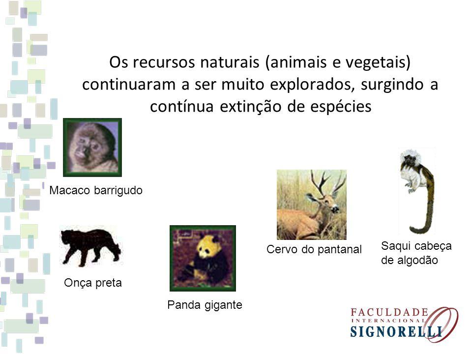 Os recursos naturais (animais e vegetais) continuaram a ser muito explorados, surgindo a contínua extinção de espécies Macaco barrigudo Saqui cabeça d