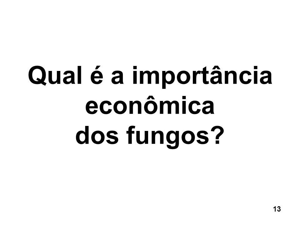 Qual é a importância econômica dos fungos? 13