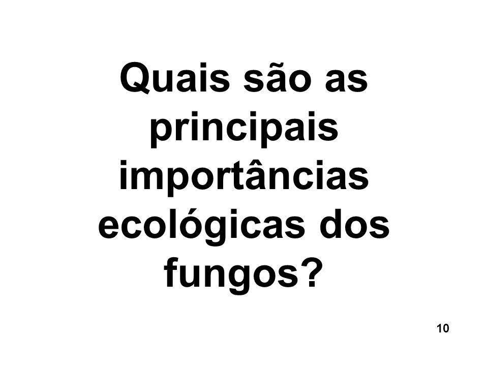 Quais são as principais importâncias ecológicas dos fungos? 10