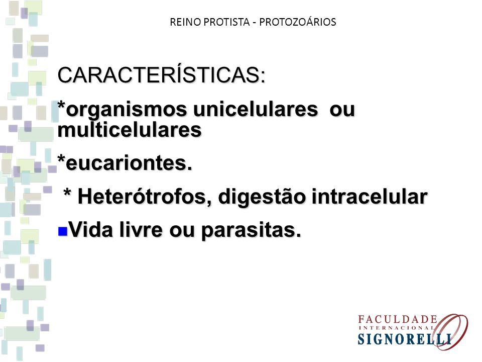 CARACTERÍSTICAS: *organismos unicelulares ou multicelulares *eucariontes. * Heterótrofos, digestão intracelular * Heterótrofos, digestão intracelular