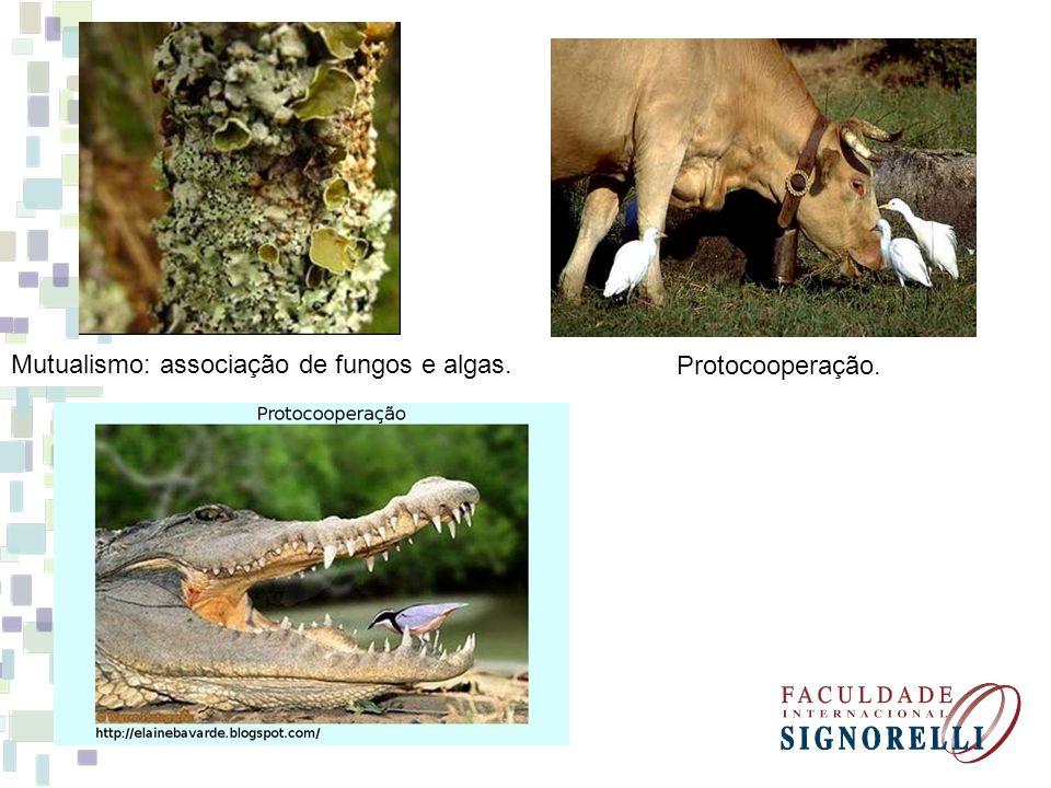 Mutualismo: associação de fungos e algas. Protocooperação.