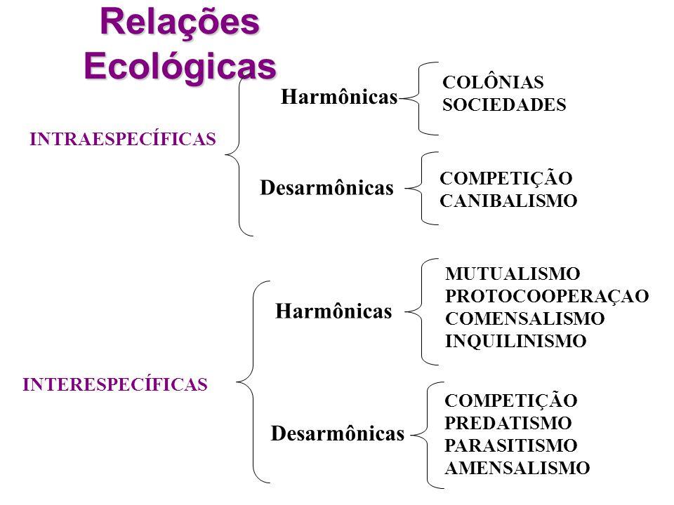 Relações Ecológicas INTRAESPECÍFICAS INTERESPECÍFICAS COLÔNIAS SOCIEDADES Harmônicas Desarmônicas MUTUALISMO PROTOCOOPERAÇAO COMENSALISMO INQUILINISMO COMPETIÇÃO PREDATISMO PARASITISMO AMENSALISMO Harmônicas Desarmônicas COMPETIÇÃO CANIBALISMO