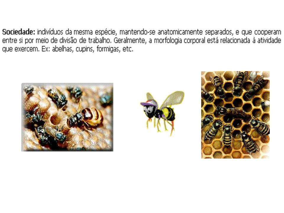 Intraespecíficas harmônicas Ex. Algas, caravelas