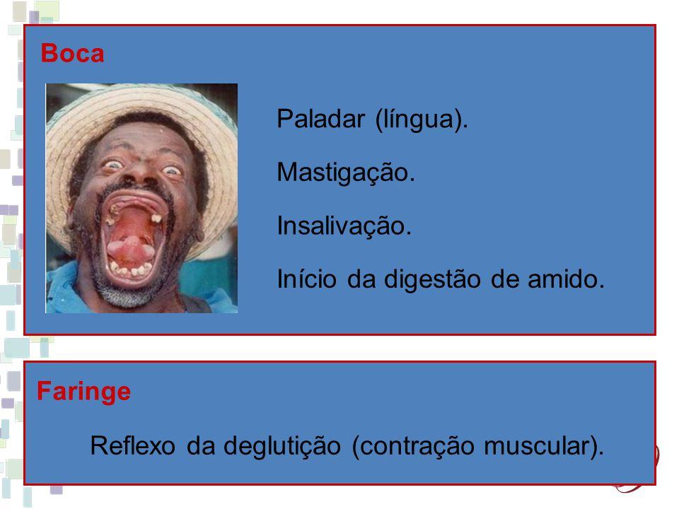 Boca Faringe Reflexo da deglutição (contração muscular). Paladar (língua). Mastigação. Insalivação. Início da digestão de amido.