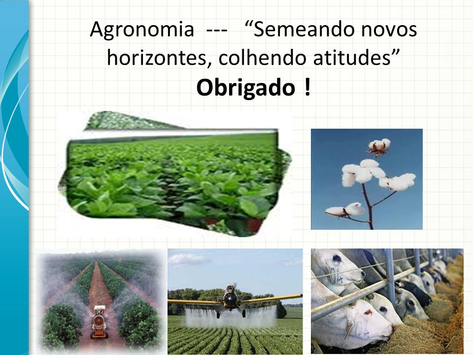 Agronomia --- Semeando novos horizontes, colhendo atitudes Obrigado !