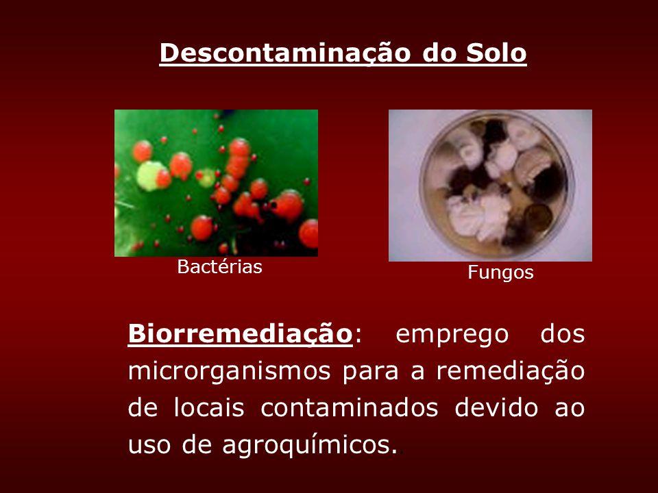 Descontaminação do Solo Biorremediação: emprego dos microrganismos para a remediação de locais contaminados devido ao uso de agroquímicos.. Bactérias
