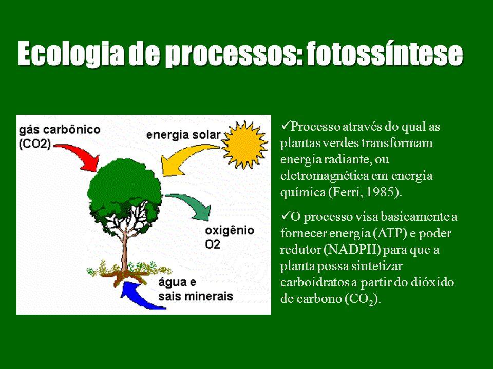 Ecologia de processos Eficiências Energéticas : As proporções (ou razões) entre os fluxos de energia em diversos pontos ao longo da cadeia de alimento