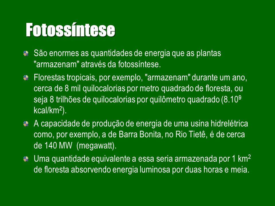 Ecologia de processos: fotossíntese Processo através do qual as plantas verdes transformam energia radiante, ou eletromagnética em energia química (Fe