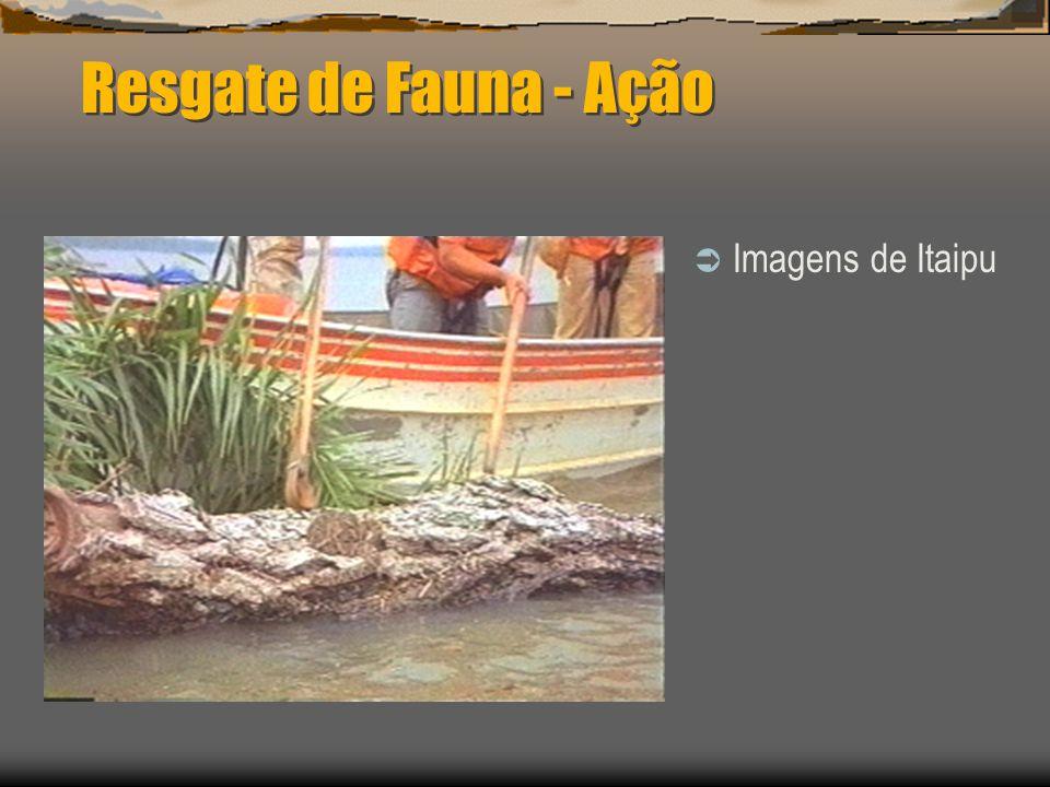 Dados de alguns resgates EmpreendimentoÁrea atingidaMamíferosRépteisOutrosPotência MW Itaipu (PR)1350 km 2 91261905180246 12600 Tucuruí (PA)2430 km 2