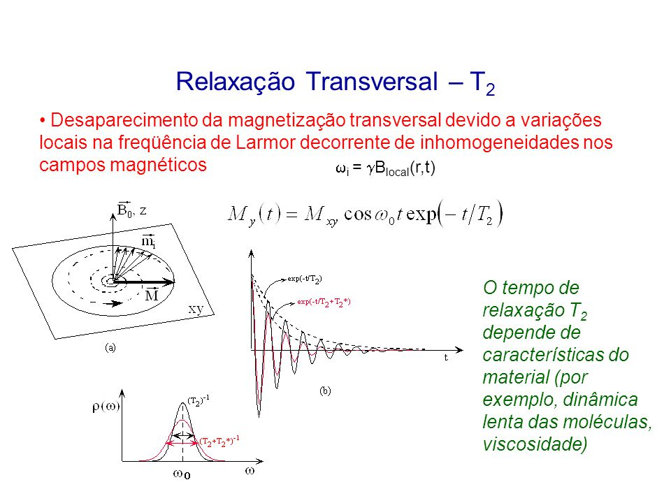 Relaxação Transversal – T 2 Desaparecimento da magnetização transversal devido a variações locais na freqüência de Larmor decorrente de inhomogeneidad
