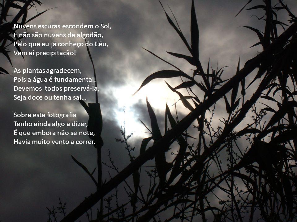 Nuvens escuras escondem o Sol, E não são nuvens de algodão, Pelo que eu já conheço do Céu, Vem aí precipitação.