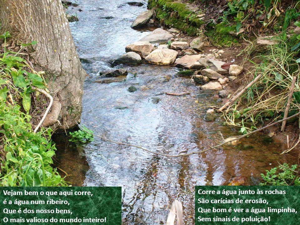 Vejam bem o que aqui corre, é a água num ribeiro, Que é dos nosso bens, O mais valioso do mundo inteiro.