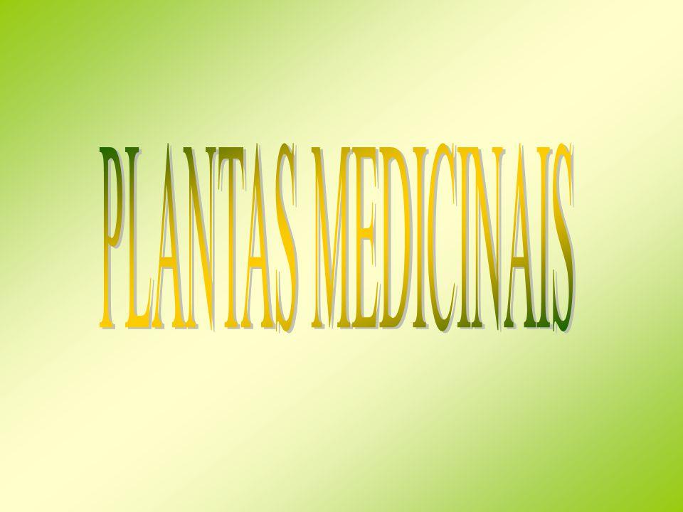 Amor – de – hortelão (Galium aparine) Planta anual trepadora.
