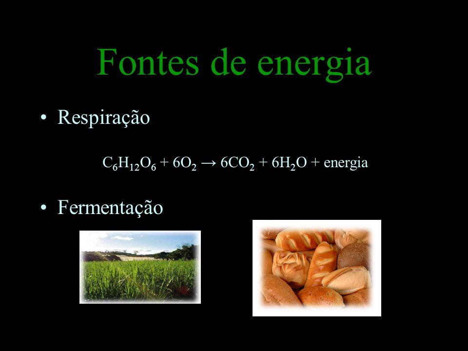 Fontes de energia Respiração Fermentação C 6 H 12 O 6 + 6O 2 6CO 2 + 6H 2 O + energia