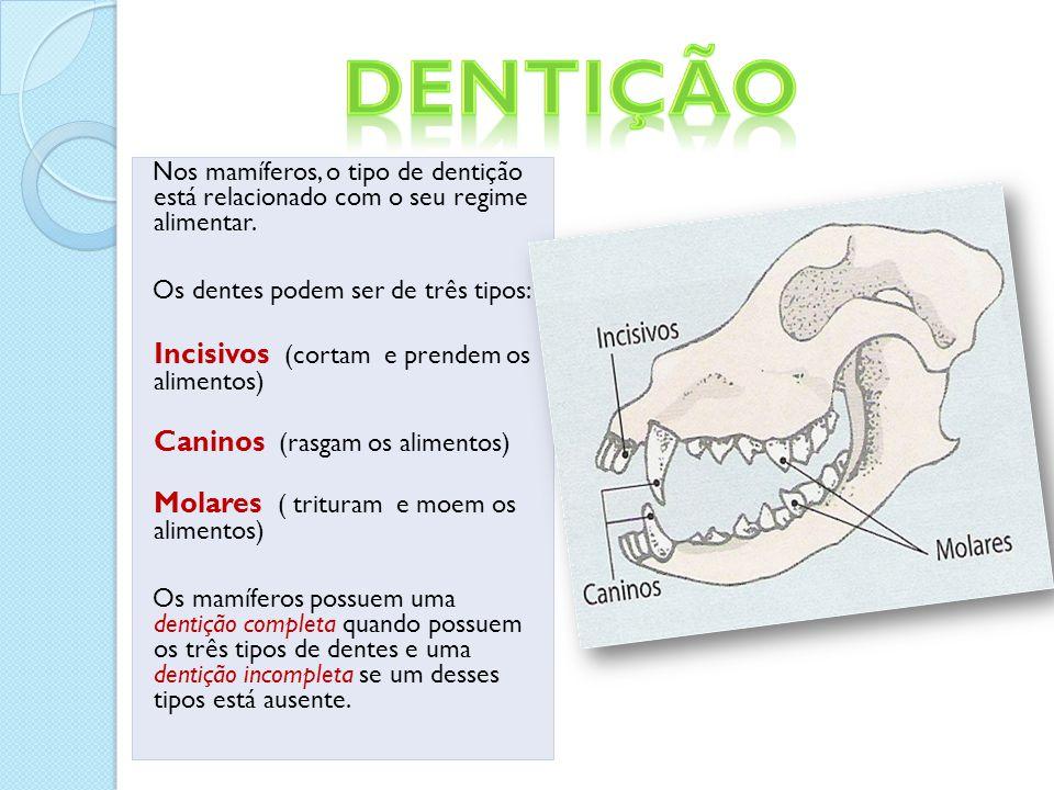 Nos mamíferos, o tipo de dentição está relacionado com o seu regime alimentar.