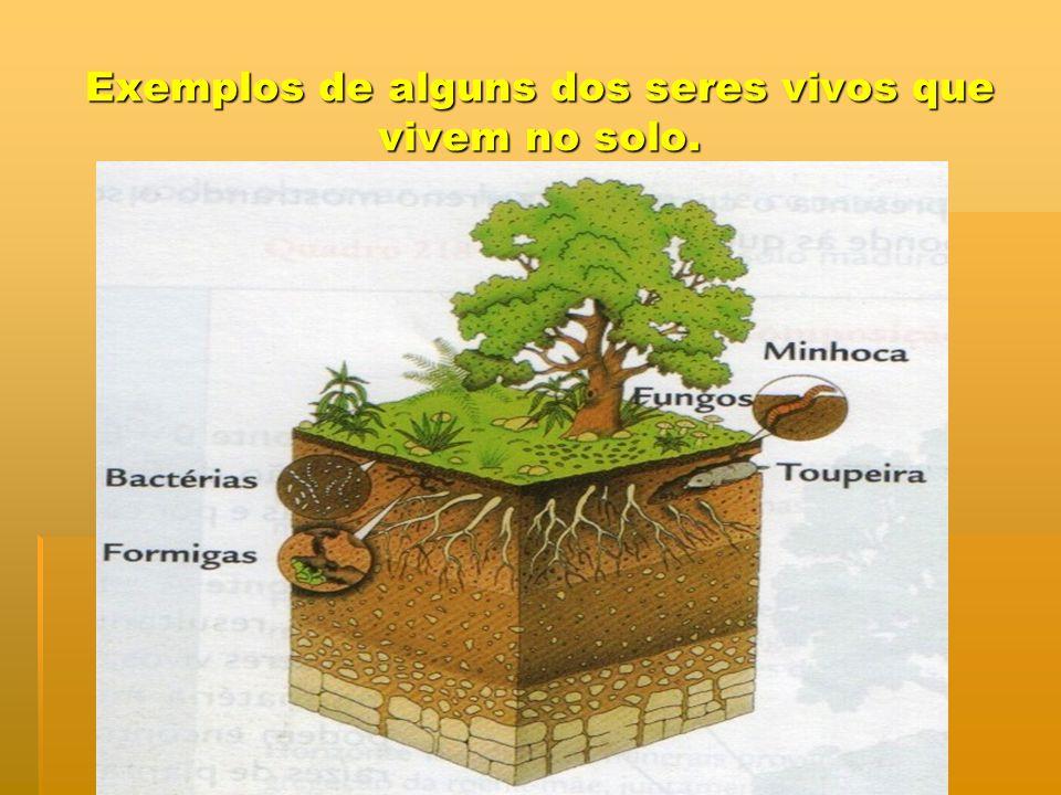 Exemplos de alguns dos seres vivos que vivem no solo.
