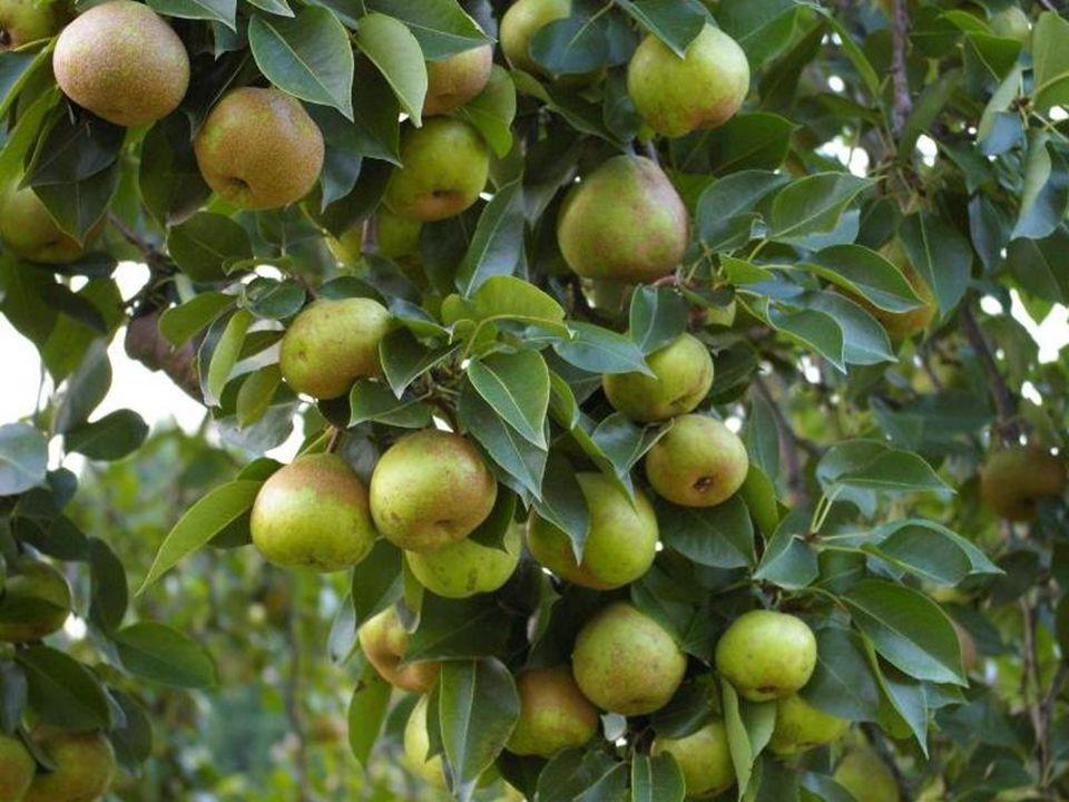 Ele disse que a árvore estava carregada e arqueada cheia de frutas, vida e promessas...