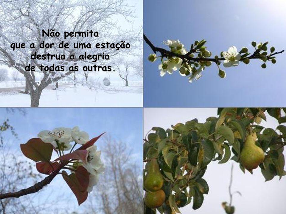 Se alguém desistir no INVERNO, perderá as promessas da PRIMAVERA, a beleza do VERÃO e a expectativa do OUTONO.