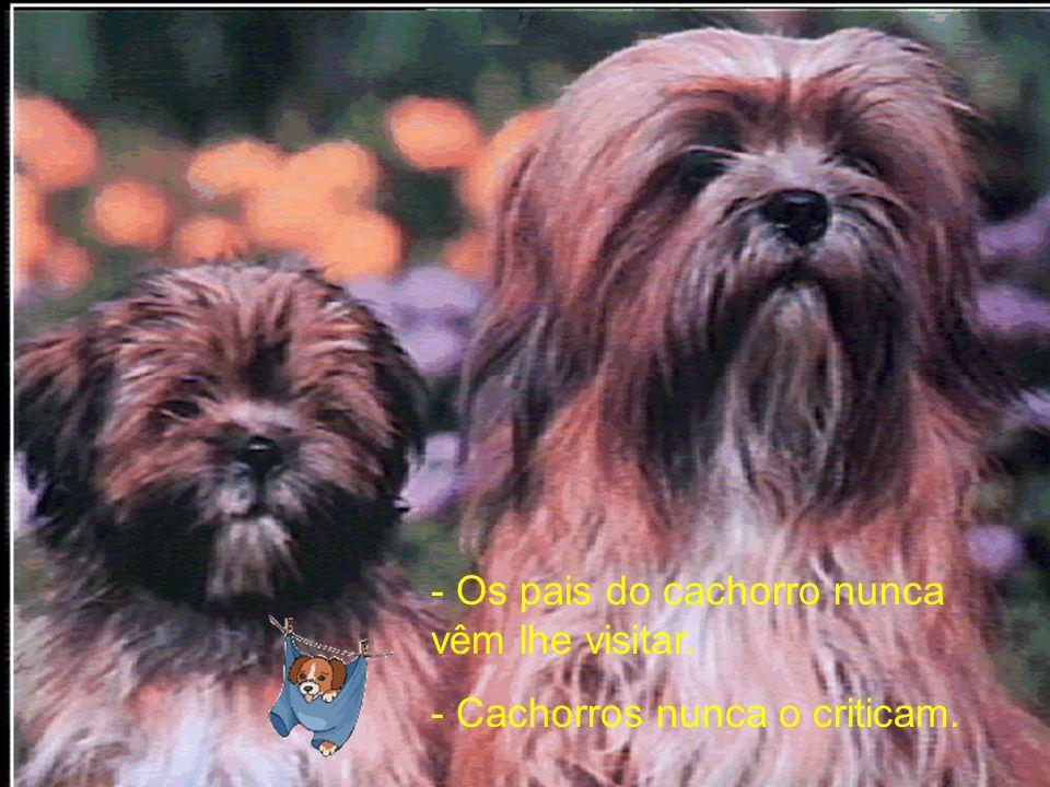 - Cachorros não usam cartão de crédito.