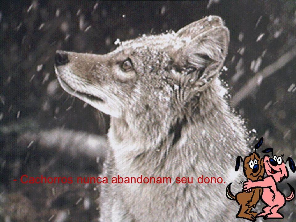 - Cachorros nunca abandonam seu dono.