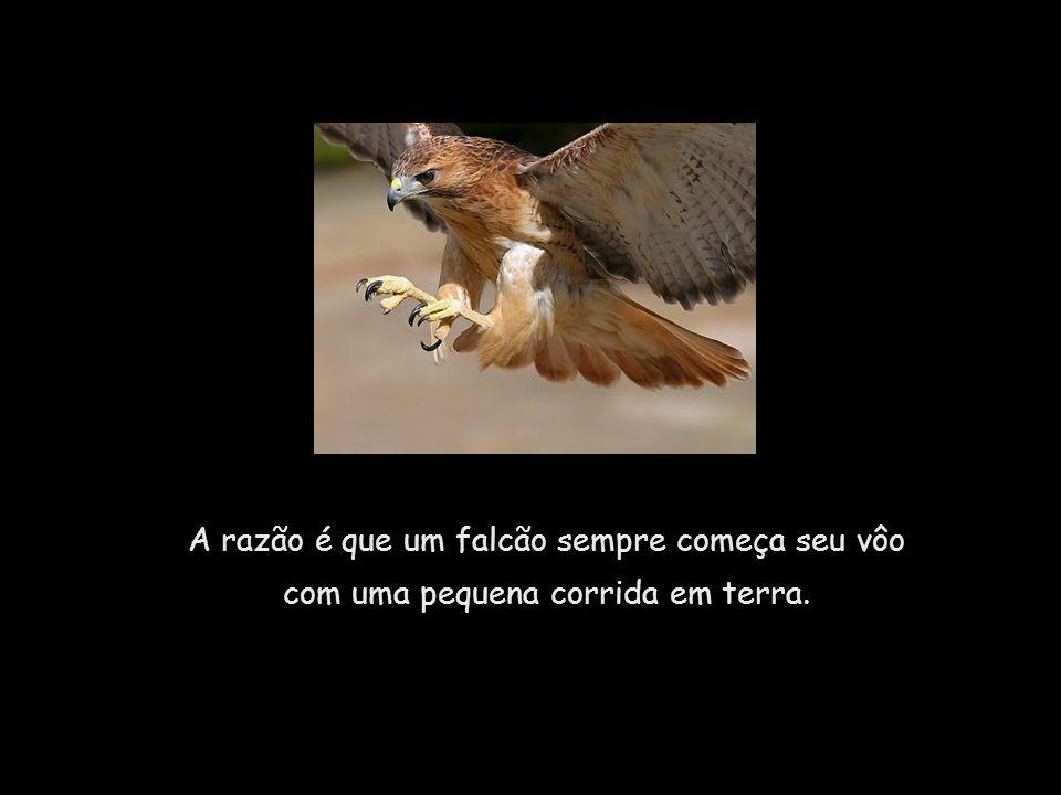 Se você colocar um falcão em um cercado de 1m², inteiramente aberto em cima, ele se tornará um prisioneiro, apesar de sua habilidade para o vôo.